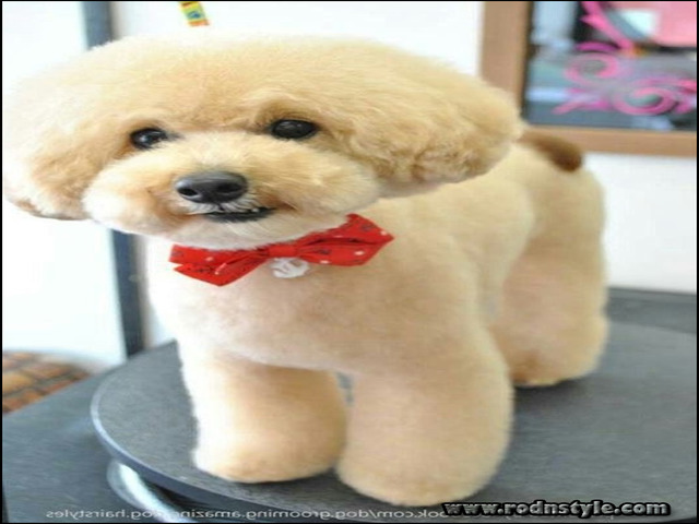 Image for How Successful People Make the Most of Their Types Of Dog Haircuts