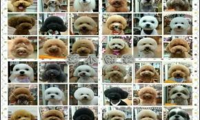 Types Of Dog Haircuts 3