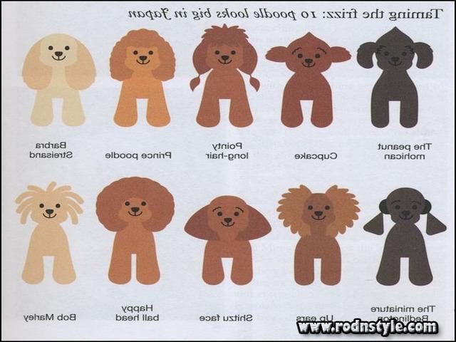 Types Of Dog Haircuts 6