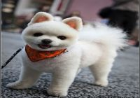 Types Of Dog Haircuts 1