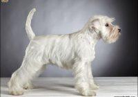 Types Of Dog Haircuts 11