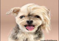 Types Of Dog Haircuts 12