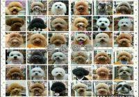 Types Of Dog Haircuts 3