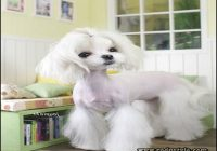 Types Of Dog Haircuts 4