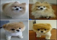 Types Of Dog Haircuts 9